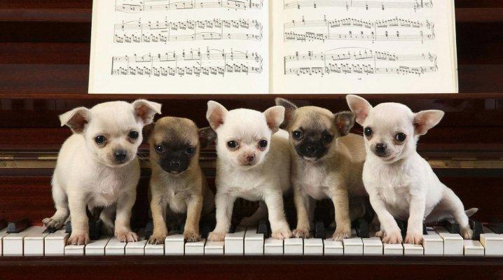 Blagues musicales, les animaux musiciens