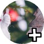 Toutes les partitions de chants Noël dans d'autres langues
